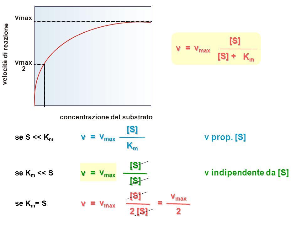v = vmax [S] Km [S] + v = vmax [S] Km v prop. [S] v = vmax [S]